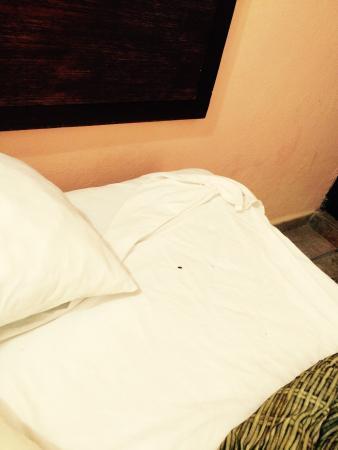 Hotel Villa del Mar: Otra vista de la cucaracha