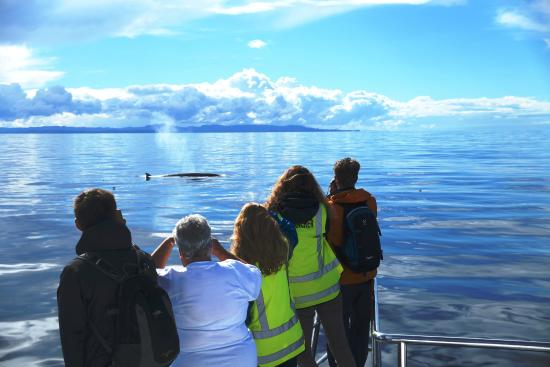 Auckland Whale & Dolphin Safari : We are extremely proud to be the leading marine-mammal research vessel in the Gulf