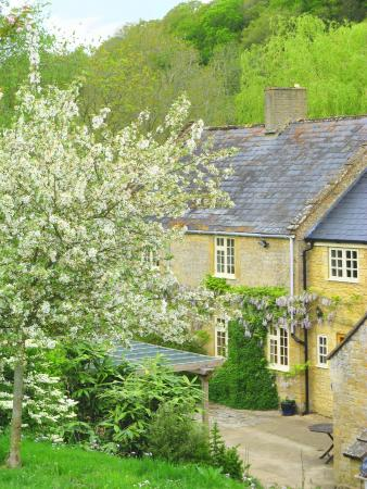 Norton Sub Hamdon, UK: View of Bagnell Cottage