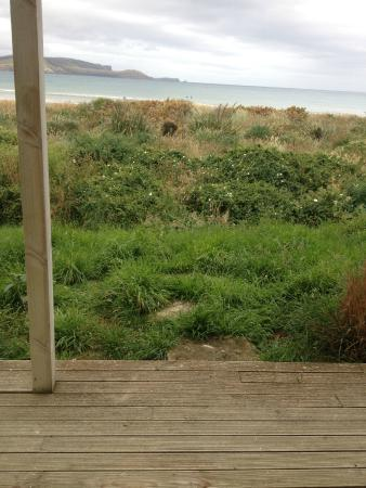 Curio Bay Accommodation: View to sea - oh that grass !