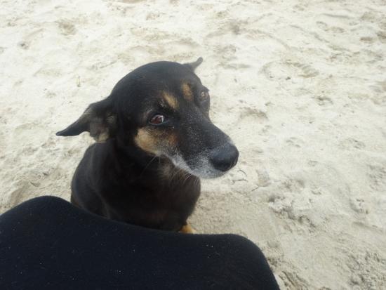 White House Beach Resort & Spa : lovely beach dog!