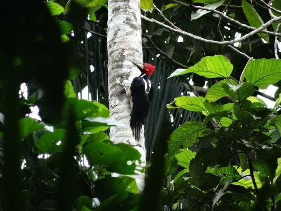 Orellana Province, Ισημερινός: AMAZONIA ORELLANA ECUADOR