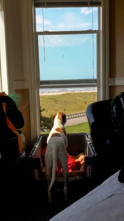 Seaside Oceanfront Inn: Harvey the Dog enjoys the view.
