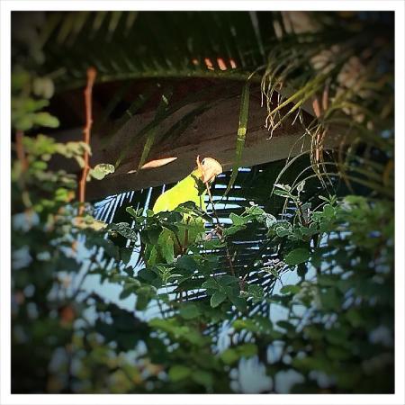 Villas Mariposas: This parrot was hilarious
