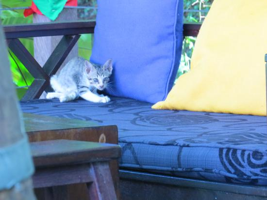 Basaga Holiday Residences: The cute shy kittens!