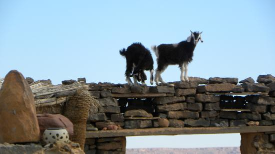Maison Boutchrafine: Goats on the Roof
