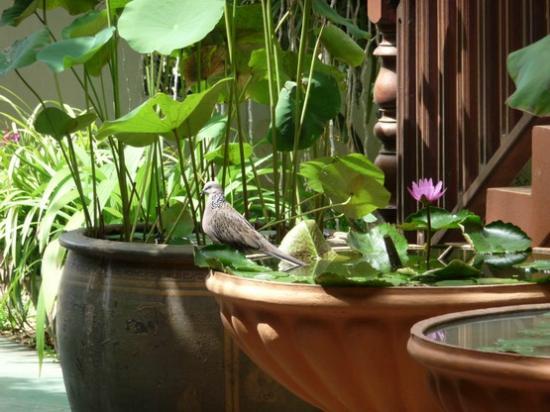 Golden Teak Home : flowers with bird