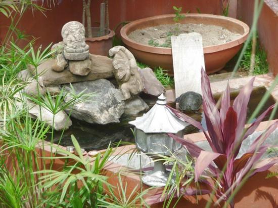 Golden Teak Home : our turtle garden
