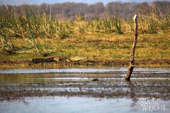 Nkwazi Lake Lodge: Nkwazi Lodge, Boat Game Viewing, Crocodile