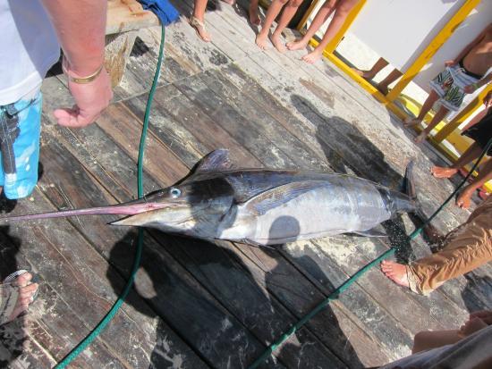 Sandos Caracol Eco Resort: Une pêche miraculeuse...