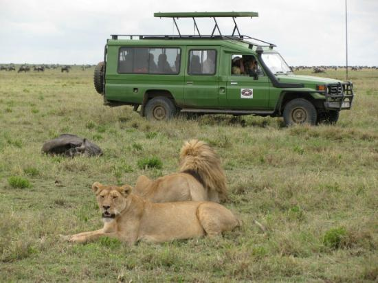 Arusha, Tanzania: 4 x 4 customised safari vehicle