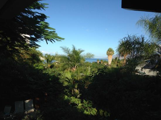 Maui Homestay B&B : View from breakfast deck