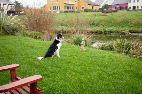 Aille River Hostel: Our riverside
