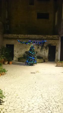 Dandi Domus Guest House: Елка во дворике