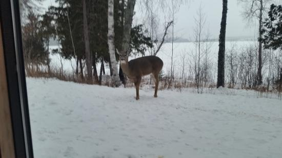 Gunflint Lodge: Deer