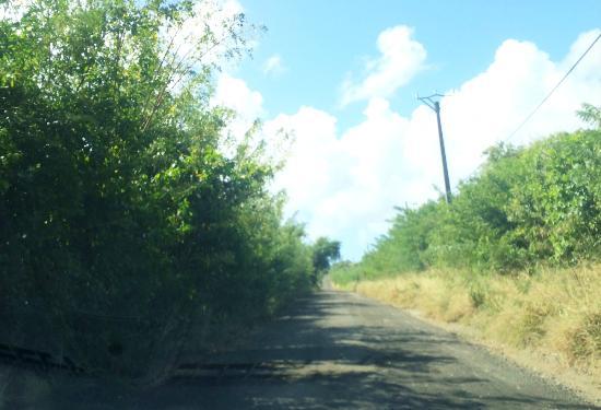 HOTEL CAP MACABOU : Chemin d'accès, sauvage mais plutôt praticable