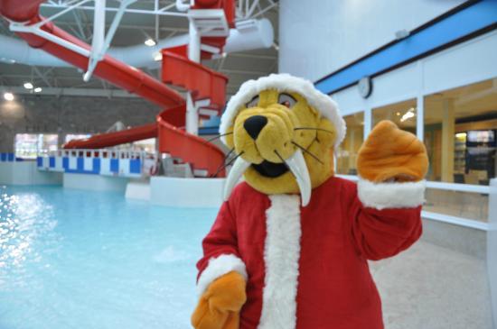 Hyde Leisure Pool: Wally Walrus