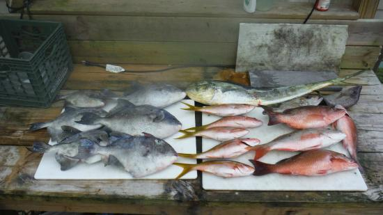 Port st lucie fishing charters port saint lucie lo for Port st lucie fishing