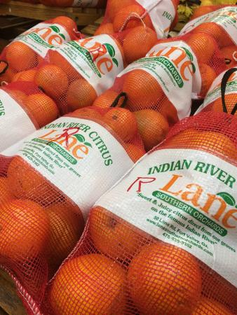 Lane Southern Orchards : Oranges