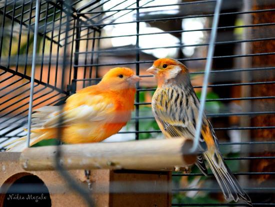 Hostal Patio Europeo: Belos pássaros na área recreativa do Hostal