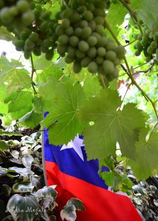 Hostal Patio Europeo: Embaixo da parreira com a bandeira do Chile