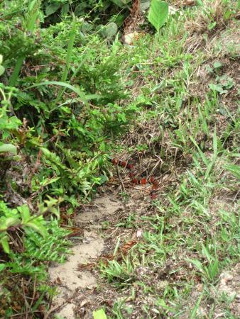 Vermelha Beach: Um certo cuidado é bom, vimos essa possível coral perto da trilha.
