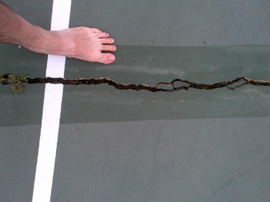Clevelands House: Huge crack on main tennis court.