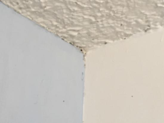 Maui Seaside Hotel : Mold along the ceiling