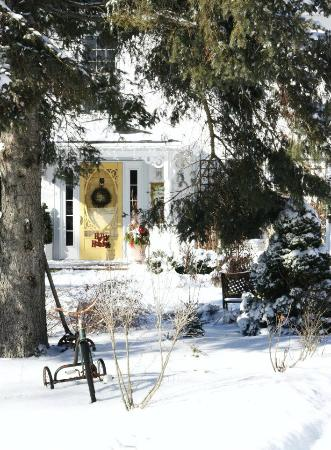 Daisy Hill Bed and Breakfast : Winter welcome