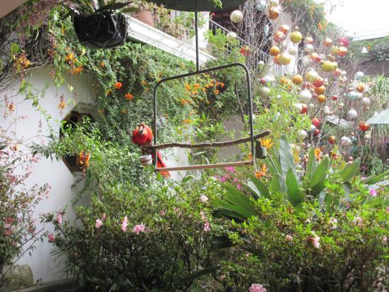 Santo Tomas Hotel: Birds in the courtyars