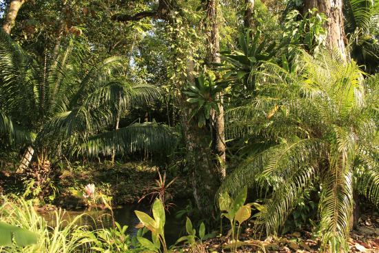 Sabalo Lodge: Verdure entourant la piscine naturelle