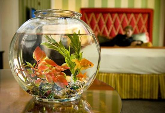 Photo of Sleep Inn & Suites Panama City