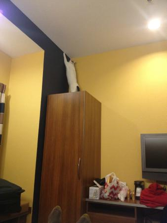 Microtel Inn & Suites by Wyndham Kearney: The cat had to explore every nook and cranny