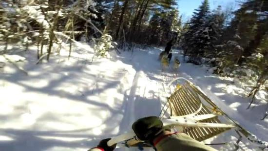 Highland Wilderness Tours: Dogsledding - A bit too sharp on the corner - Heading for a fall.