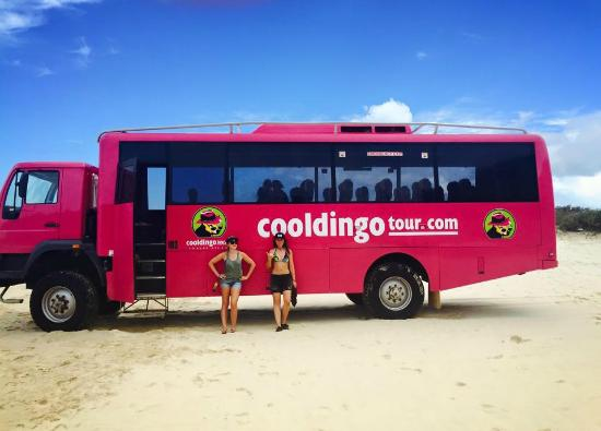 cooldingo tour bus picture of cool dingo tours fraser island tripadvisor. Black Bedroom Furniture Sets. Home Design Ideas