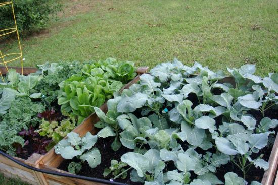 Fall vegetable garden planting - Picture of Moore Farms Botanical ...