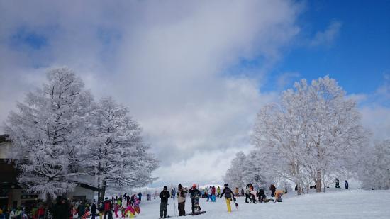 場 スキー 野沢 天気 温泉