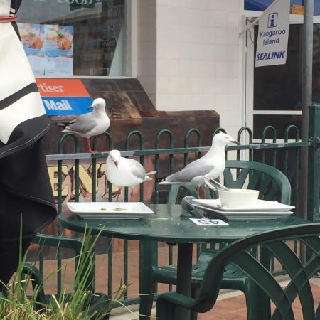 Roger's Deli: Les mouettes se chargent de vider les assiettes