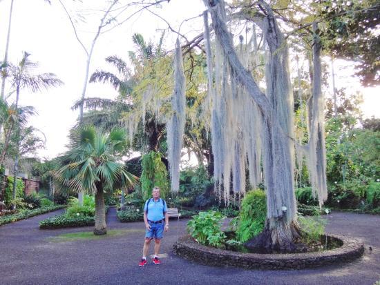 Høje træer - Picture of Botanical Gardens (Jardin Botanico), Puerto de la Cru...