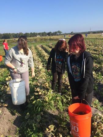 Long & Scott Farms: Gleaning for the Society of St. Andrews