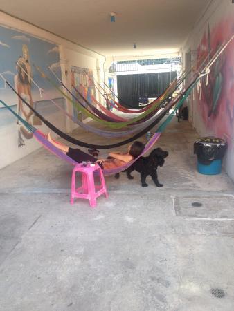 Orquideas Hostel: Relax