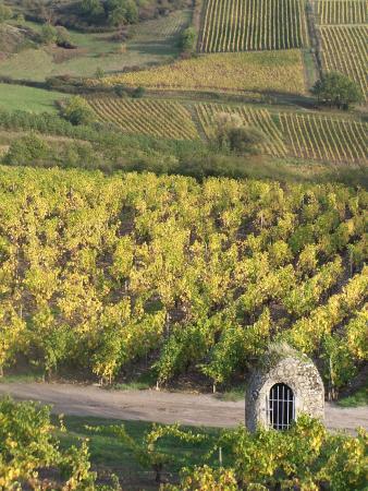 Rochefort-sur-Loire, Francia: Vignoble