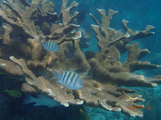 Hidden Reef Eco-Tours: Elkhorn Coral and fish