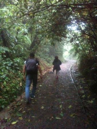 Monteverde Backpackers: the reserve