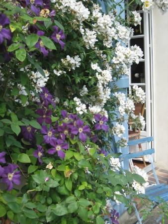 Les Chambres de la Roguenette: les rosiers et la clématite en fleur au printemps
