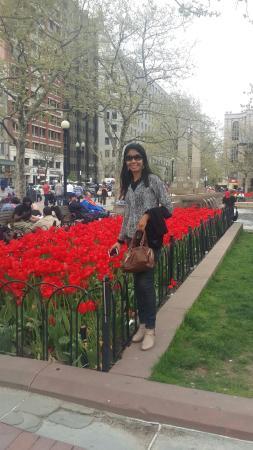 Lindas tulipas de Boston!