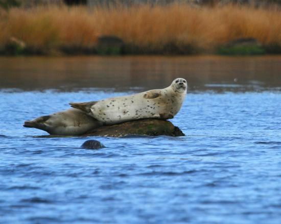 Save The Bay Seal Watch & Nature Cruises