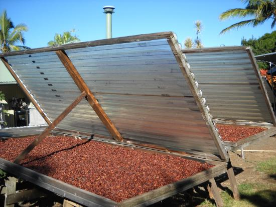the cocoa beans in the drying rack picture of the original