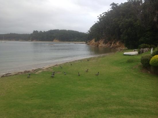 Quarantine Bay Beach Cottages: view of the bay...ducks feeding