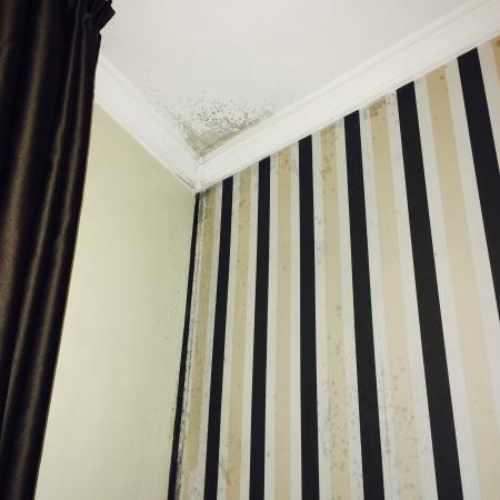 Slaapkamer - vocht/schimmel - Foto van Hotel America, Porto ...